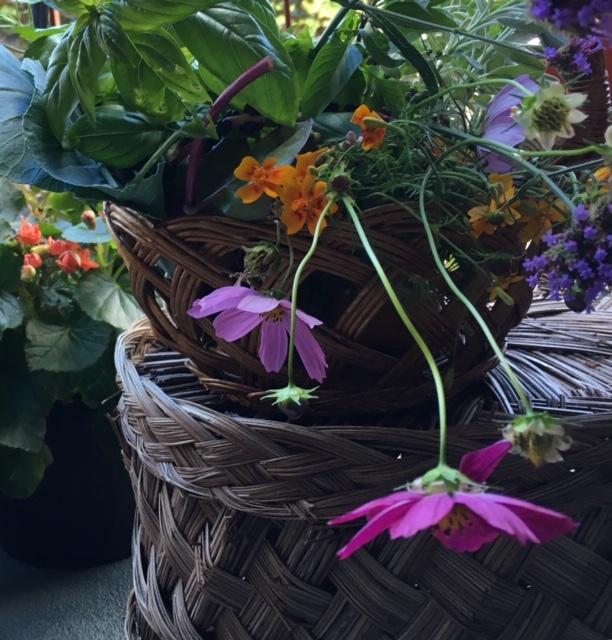 Huiles essentielles, végétaux, printemps, fleurs, feuillages,